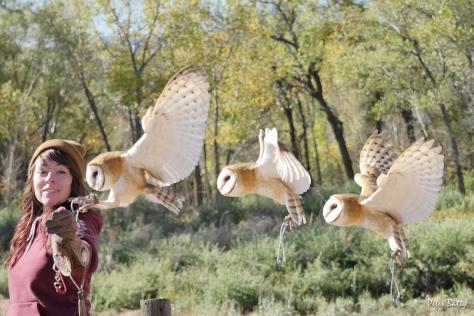Owl composite 3